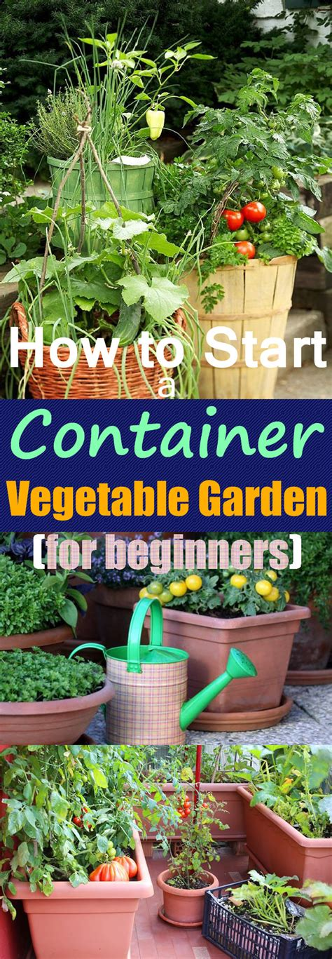 growing vegetables  pots starting  container