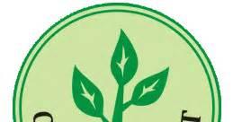 15 Benih Buah Sawo cv mitra bibit biji tanaman