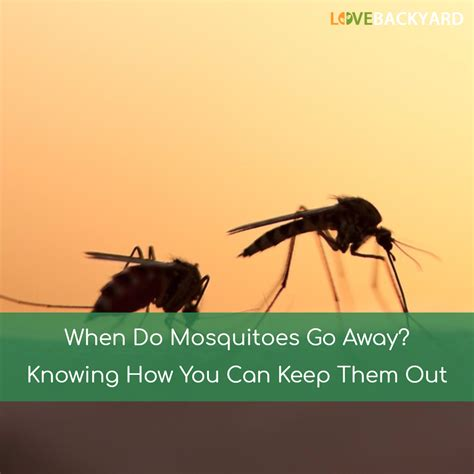 how to kill mosquitoes in home when do mosquitoes go away sep 2017 knowing how you