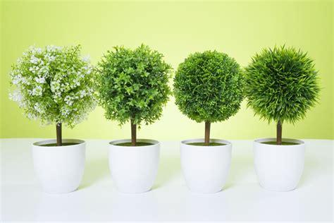 gardenia topiary tree artificial topiary tree flowers buxus boxwood