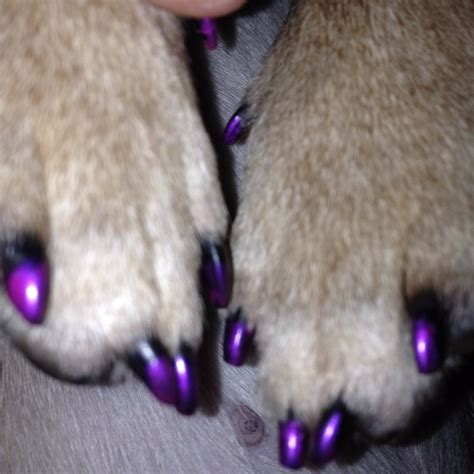 painting dogs nails 62 best nailed it doggie style pawdicures images on nails