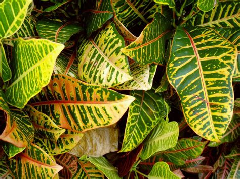 tropical plant species 225 best images about tropical plants on