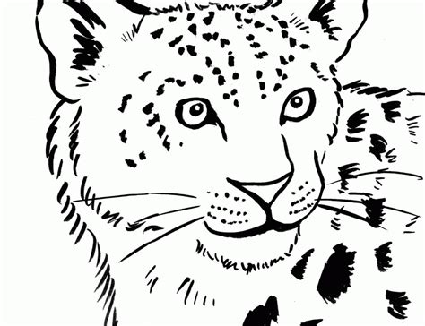 Snow Leopard Coloring Page Coloring Home Free Snow Leopard Coloring Pages To Print
