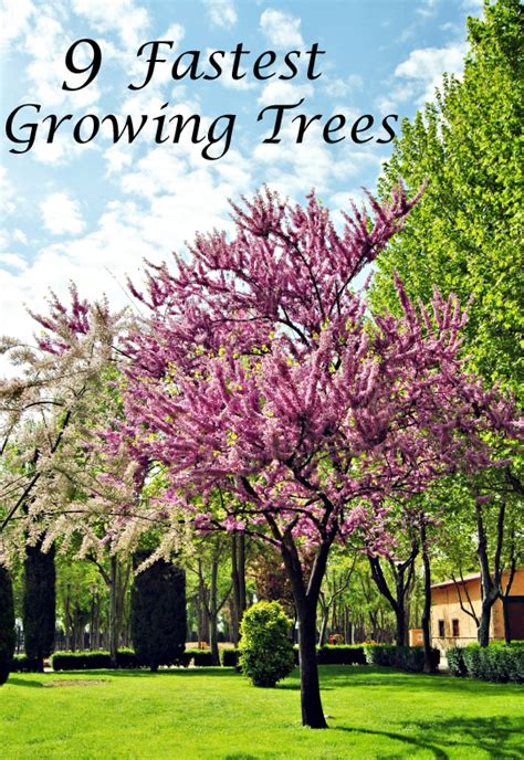 fast growing trees music search engine at search com