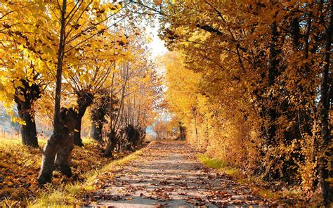 Autum In autumn road trees leaves landscape hdwallpaperfx