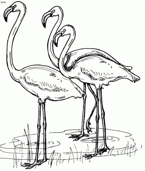 coloring book needle drop a of flamingo coloring page animal coloring