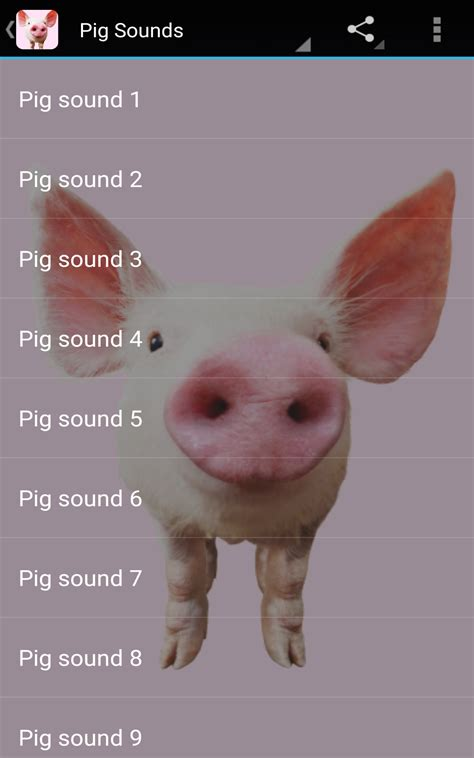 Pig With Sound pig sounds ca appstore for android