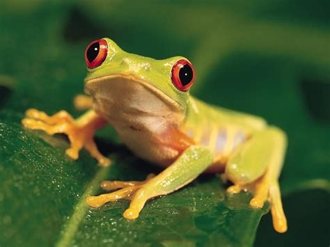 tree frog the life of animals