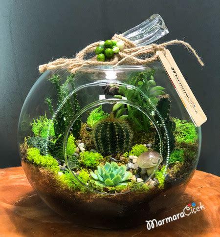 teraryumda kaktues sukulent