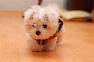 tiny tiny tiny puppy 2 1funny com