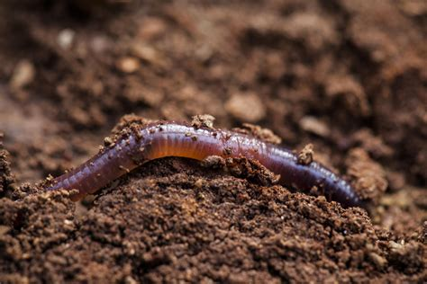 bed worms what are worm beds and how do i make one