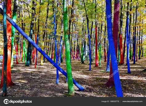 forest painted trees colored forest romania stock photo