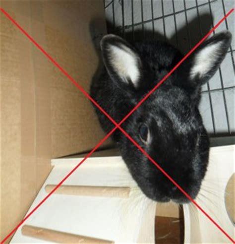 wie lange überleben giardien in der wohnung wie viele kaninchen zusammenstellung einer kaninchengruppe