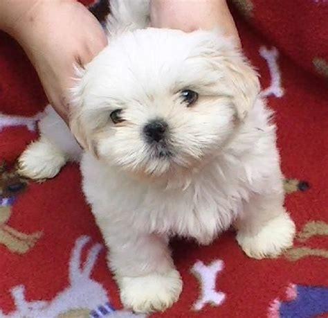 petfinder puppy