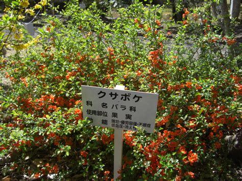 Hana 3 0 By Azmeela クサボケ 植栽 生物学 園芸の花たち シダ植物 yahoo ブログ