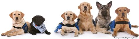 of service dogs history assistance dogs