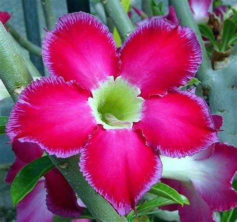 piante da appartamento con fiore pianta verde da appartamento con fiore bianco