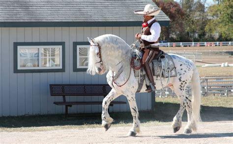 colores de cabellos bonitos los caballos m 225 s bellos del mundo