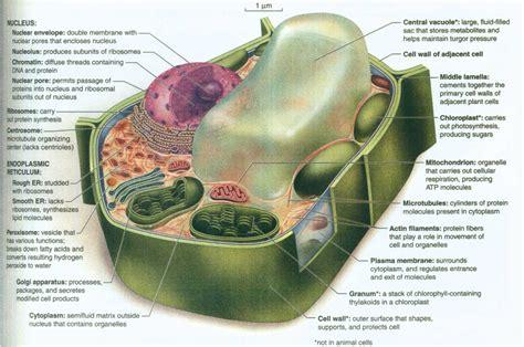 Landscape Definition In Biology Landscape Definition In Biology 28 Images Landscaping