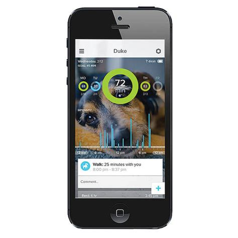 whistle tracker review whistle pet tracker review 3 months free tracking southern savers