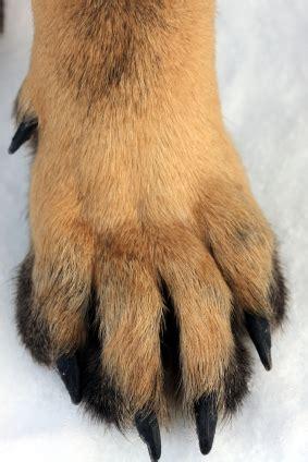 Paw Lotion Anjing 10 seasonal dangers to outdoor pets