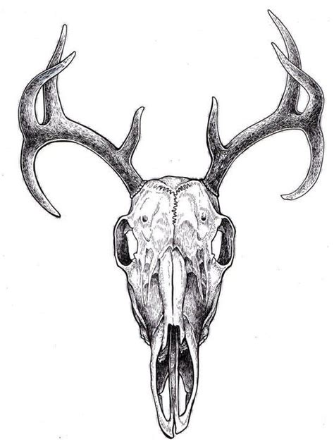 deer skull tattoo best 25 deer skull drawing ideas on animal