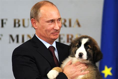 putin puppy what george w bush learned from vladimir putin s vanity fair