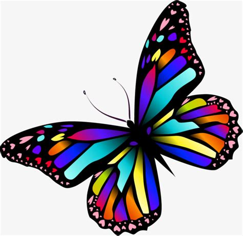 colorful butterfly colorful butterfly butterfly clipart