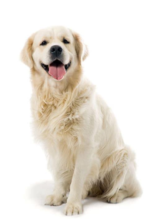 Siting dog sitting service out u go