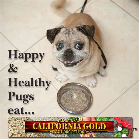healthy food for pugs pugzoo