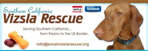 southern california vizsla rescue home