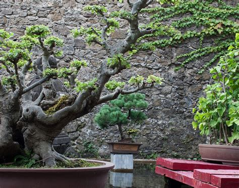 different types of japanese gardens designing a garden for your home the types and styles to