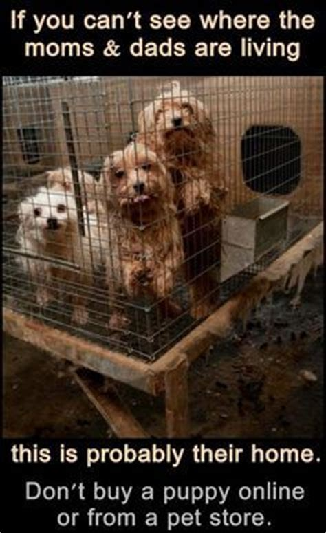just puppies puppy mill 1000 images about puppy mills exposed on puppy mills pet store and