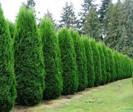 Evergreen archives affordable trees