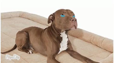 sad puppy gif sad puppy gif sad puppy discover gifs