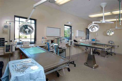 Light Table Grady Veterinary Architects Amp Animal Hospital Design