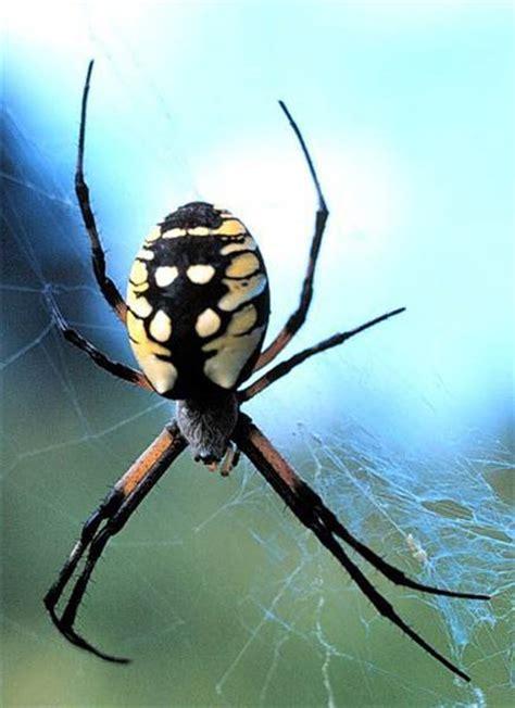 Garden Spider New York How To Identify New York Spiders Trails