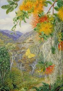 Flower Encyclopedia Parasites On Beech Trees Chili Marianne North Wikiart Org Encyclopedia Of Visual Arts