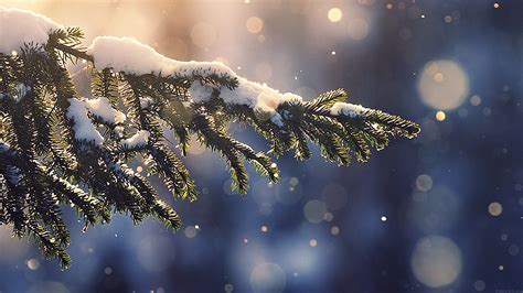 mk snowing tree blue christmas winter nature mountain