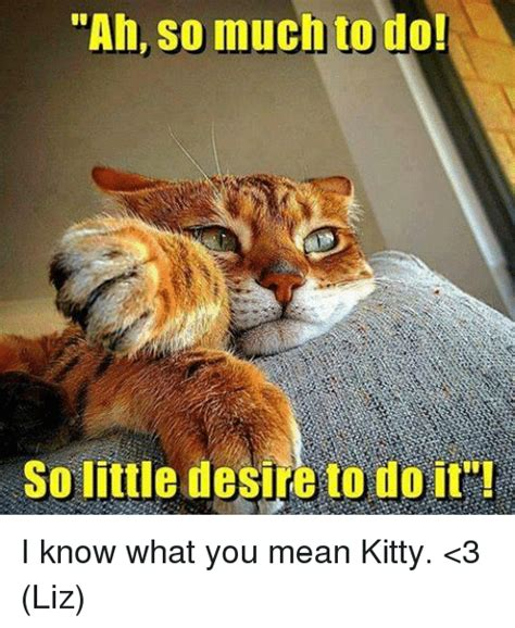 Mean Kitty Meme - 25 best memes about so much to do so little desire to do