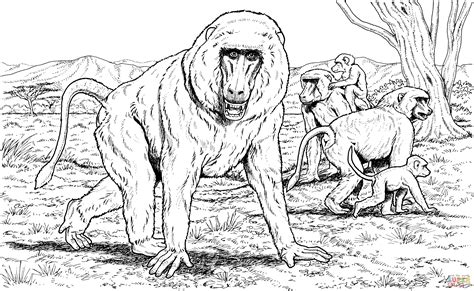 Baboon Coloring Pages baboon family coloring page supercoloring