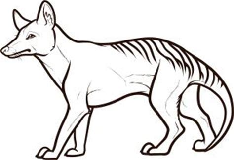 tasmanian tiger coloring page how to draw how to draw a tasmanian tiger tasmanian wolf
