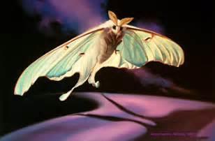 pretty luna moth challenge day 2 upon my word