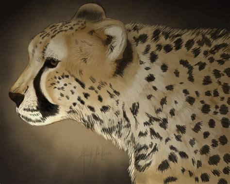 sketchbook cheetah cheetah sketch by artkayz on deviantart