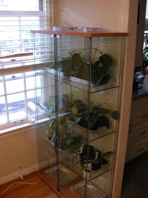 indoor greenhouse   ideas  living  greens