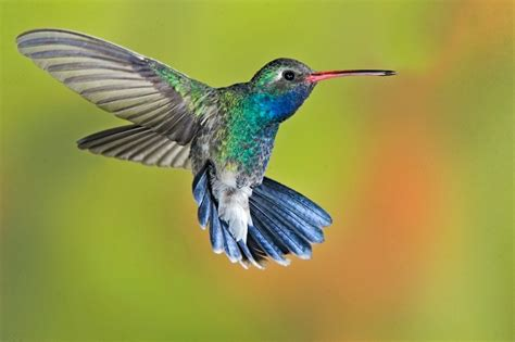 how to attract hummingbirds to your garden mama knows