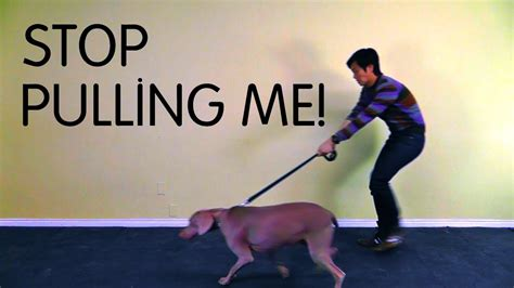 how to stop from pulling on leash polite leash walking class teach to stop pulling on leash