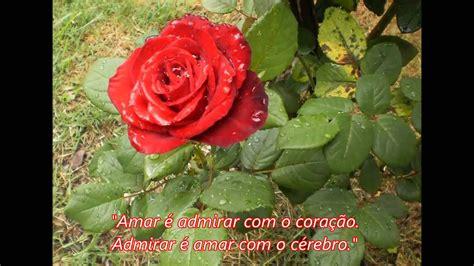Frases De Rosas Frasesypensamientoscomar | rosas e frases de amor youtube