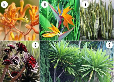 tropical plants san diego 5 kangaroo paw 6 bird of paradise 7 sansevieria indoor