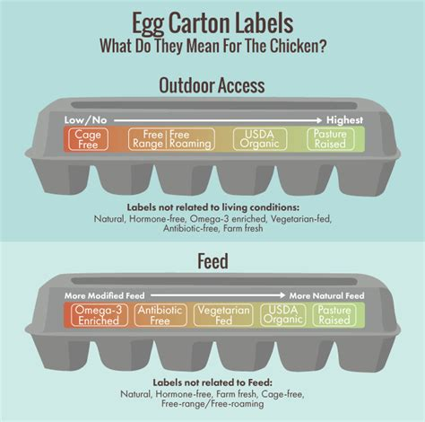 egg labels template eggsposing egg labels fix